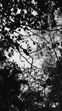 Leaf silhouette. Shot into the sky throght the tree in black and white Royalty Free Stock Image