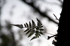 Leaf Silhouette Royalty Free Stock Photos