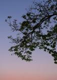 Leaf silhouette on twilight sky background Stock Photo