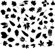 Leaf silhouettes Royalty Free Stock Photo