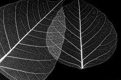 Leaf silhouettes Royalty Free Stock Photography