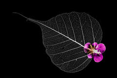 Leaf silhouettes with pink flower Stock Photos