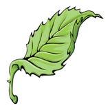 Leaf. Single colorful leaf on white Stock Image