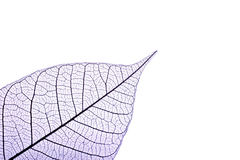 Leaf skeleton Royalty Free Stock Images