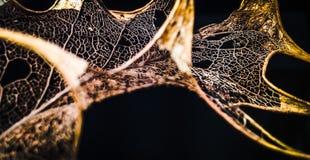 Leaf skeleton Royalty Free Stock Photos