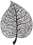 Leaf skeleton silhouette. On white background. Vector illustration Royalty Free Stock Images