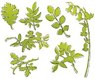 Leaf Sketches Royalty Free Stock Images