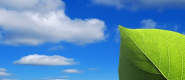 Leaf in sky Royalty Free Stock Images