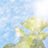 Leaf on the sky background. Water drops falling from wet leaf Royalty Free Stock Photos