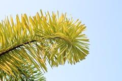 leaf on sky background Stock Photo