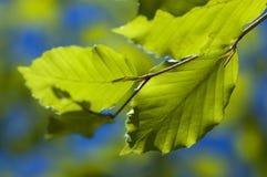 Leaf on sky blue background Royalty Free Stock Images