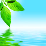 Leaf, Sky and Water. Fresh leaf, blue sky and shine water surface (blank space for text Royalty Free Stock Image