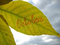 Leaf and sky. This is a yellow leaf on the sky background Stock Image