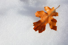 Leaf on Snow. A brown leaf on white snow Stock Photo