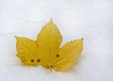 Leaf on snow. Single yellow fallen maple leaf on fresh snow stock photos