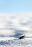 Leaf on the snow. And blue sky royalty free stock images