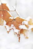 Leaf In The Snow Royalty Free Stock Photos