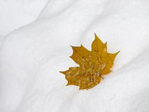 Leaf on snow 2. The yellow maple leaf on the snow background Royalty Free Stock Photos