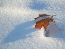 Leaf and snow. Maple leaf on  the snow Royalty Free Stock Photos