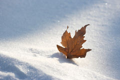 Leaf in snow. A old leaf in snow Royalty Free Stock Image