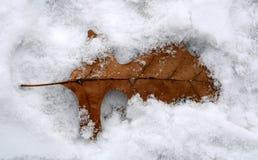 Leaf in Snow Stock Photos