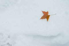 Leaf on Snow. Brown maple leaf lying on snow after shedding Stock Image