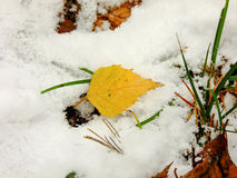 Leaf on Snow. Closeup View of Autumn Leaf on cold Winter Snow Royalty Free Stock Photos