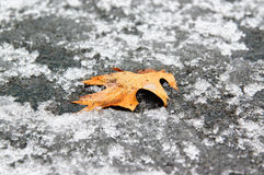 Leaf on the snow. Early winter, temprature a little below zero and one lonely fallen orange leaf on the ground Stock Image