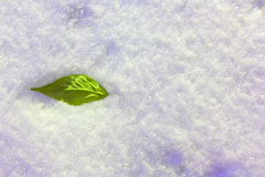 Leaf in the snow. Green leaf on snow background. Royalty Free Stock Image
