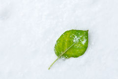 Leaf on Snow Stock Images