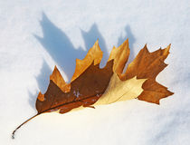 Leaf on the snow Stock Photos