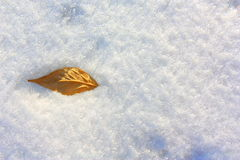 Leaf in the snow. Winter view. Stock Photography