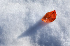 Leaf on snow. Royalty Free Stock Photo