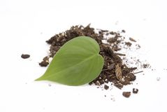 Leaf in soil Royalty Free Stock Image