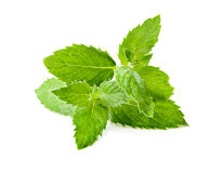 Leaf spearmint on white background Royalty Free Stock Photo