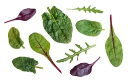 Leaf of spinach, chard, red beet and rucola Royalty Free Stock Photo