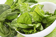 Leaf spinach in colander Royalty Free Stock Photo