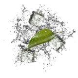 Leaf Splash Royalty Free Stock Photo