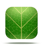 Leaf Square Icon Vector Stock Image