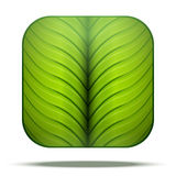 Leaf Square Icon Vector Royalty Free Stock Photos