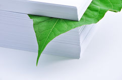 Leaf in stack of paper Stock Image