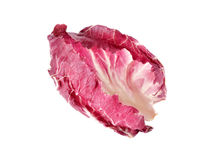 Leaf stalk of fresh red radicchio on white. Background Royalty Free Stock Image