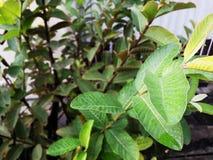 Leaf Stalk - Green World royalty free stock image