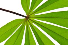 Leaf star. Pattern of leaf in Thailand Stock Photography