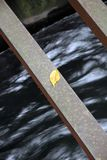 Leaf on Steel Royalty Free Stock Photography
