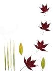 Leaf Stillness stock illustration