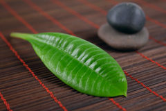 Leaf and stone Royalty Free Stock Image