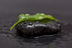 Leaf on the stone. A green leaf on the black stone with waterdrops Royalty Free Stock Photography