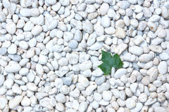 Leaf on stone. Green leaf on whiite stone royalty free stock photos