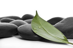 Leaf and stone Royalty Free Stock Images